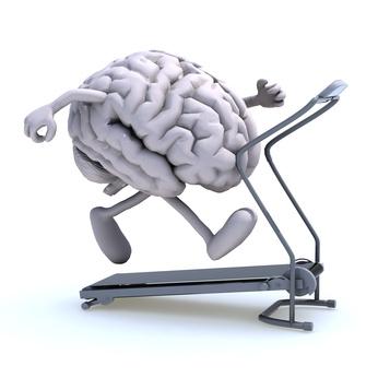 Un cerveau svelte
